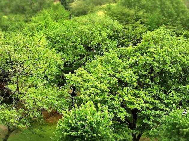新緑 木 視力回復